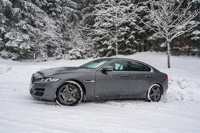 Jaguar im Schnee