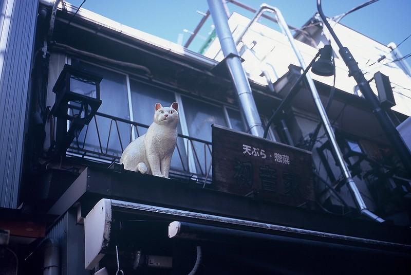 KONICA HEXAR RF+Voigtlander Color Scopar 35mm f2.5谷中銀座初音家の猫