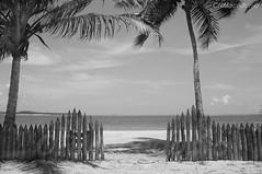 Paraíso em preto e branco