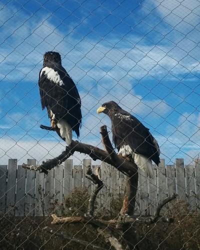 Poised (1) #toronto #torontozoo #birds #latergram