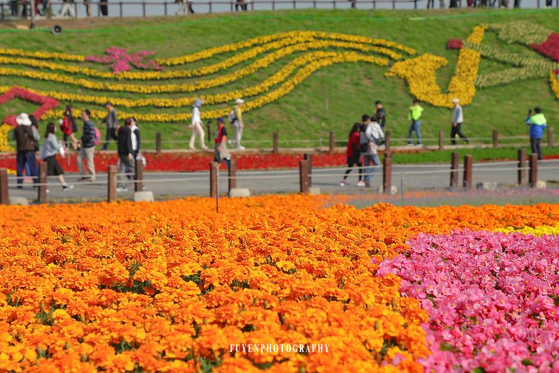 2017臺中國際花毯節8