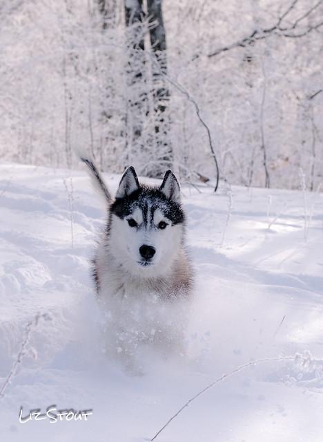 20180102 Snowdogs_254