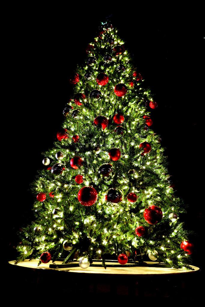 Christmas Tree Bill.Tucson S Official Christmas Tree Bill Morrow Flickr