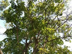 Tree At Fountain Rock Park.