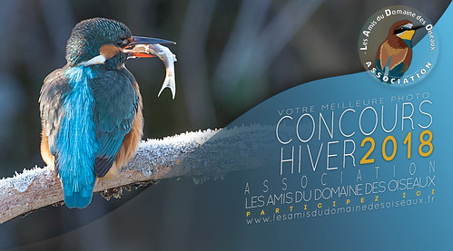 Concours photo HIVER2018