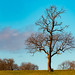 Winter Tree, Leicestershire (12/365:2018)