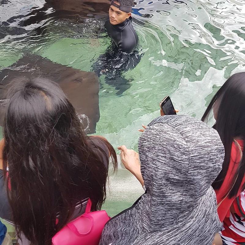 Manila Ocean Park - Sharks and Rays Encounter