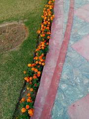 Walkway with Beautiful Flowers.