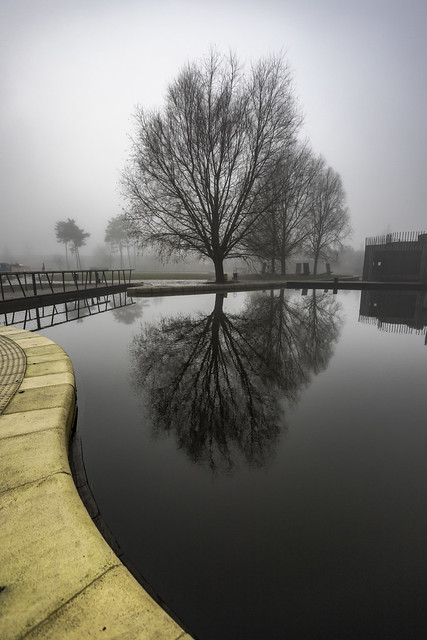 Calm in the mist