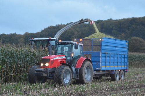 Claas Jaguar 970 SPFH filling a Broughan Engineering Trailer drawn by a Massey Ferguson 6480 Tractor
