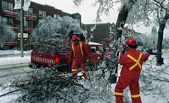 Ramassage des branches cassées par le verglas sur le boulevard Saint-Joseph (secteur de l'avenue Papineau). 8 janvier 1998. VM94-1998-0001-043. Archives de la Ville de Montréal.