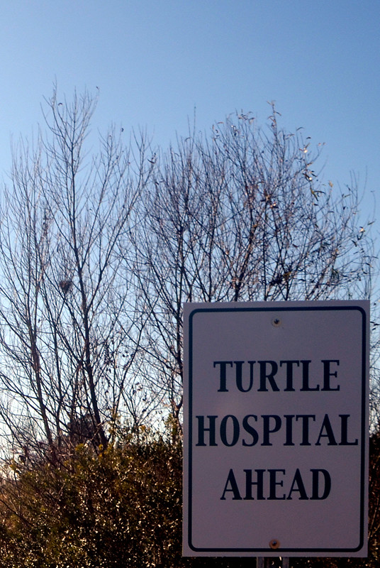 TurtleHosp