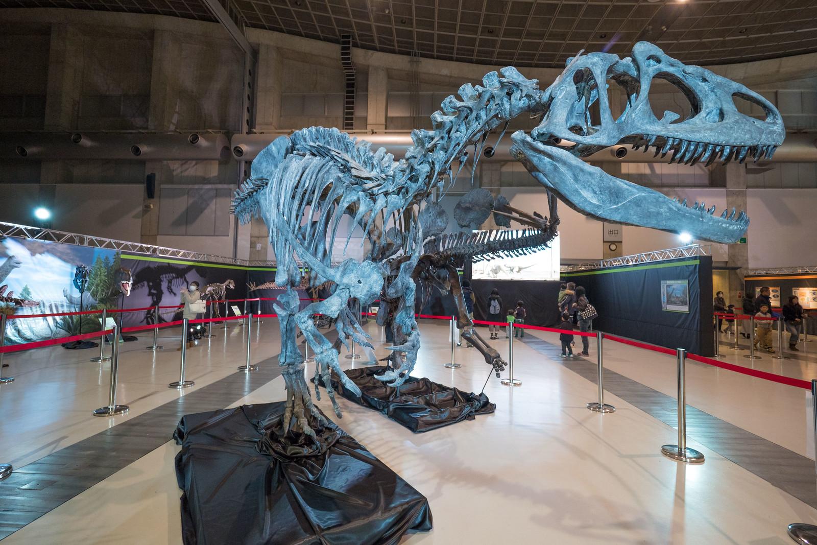大恐竜博-6