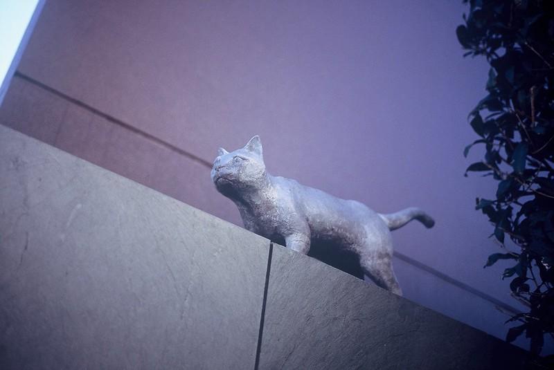 KONICA HEXAR RF+Voigtlander Color Scopar 35mm f2.5根津夏目漱石旧居跡の猫