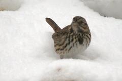 snow birds IMG_7240