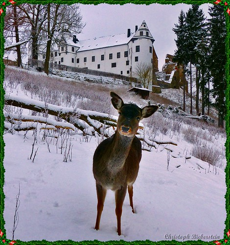 Damwild unterm Schloss Lauenstein im Erzgebirge