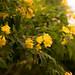 Flowers @ Upper Paya Lebar