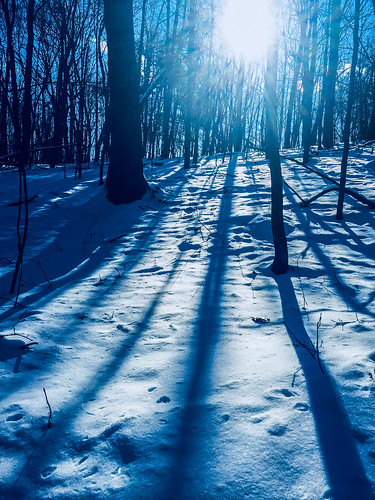 forest snow sun shadows trees winter woods selectivecolor iphone6 sullivancounty monticello newyork unitedstates landscape nature