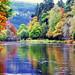 Autumn on the Tay