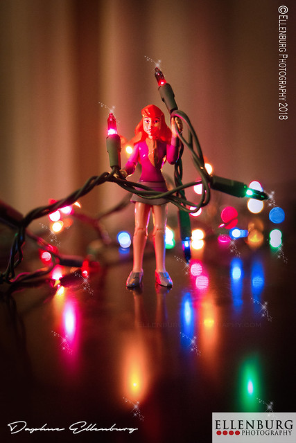 Daphne with Christmas Lights