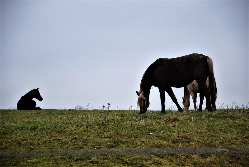 Horses 06.02 (6)