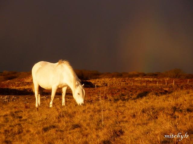 Snowbow Horse 1