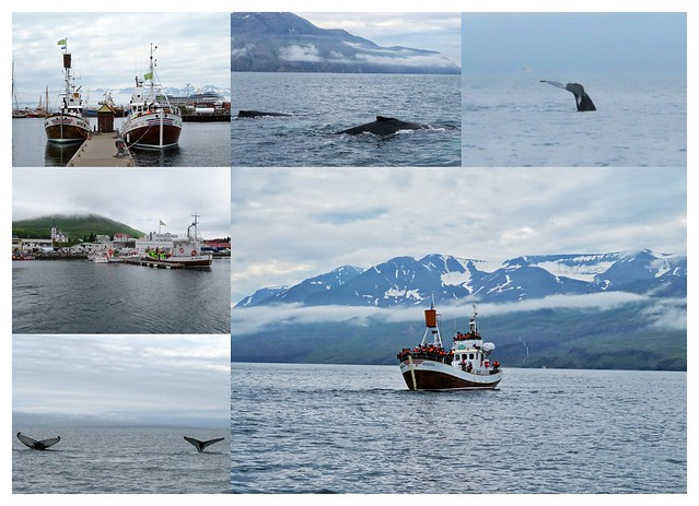 Whalewatching Island
