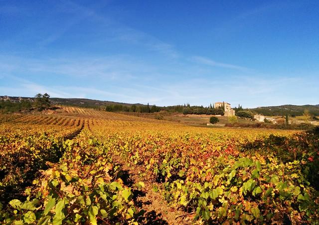 Chateau de Serres & vines