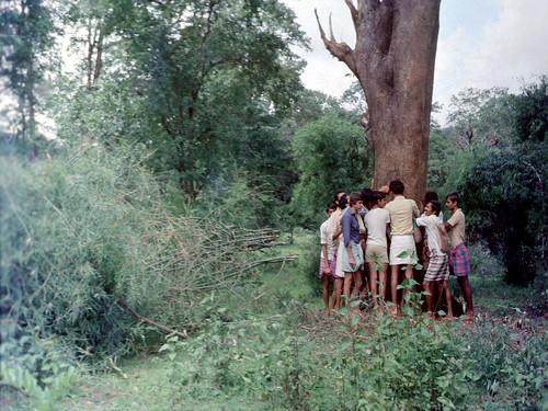 दक्षिण भारत में पेड़ों के साथ खड़े अप्पिको आन्दोलन के लोग