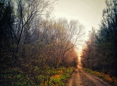 Last memories of autumn