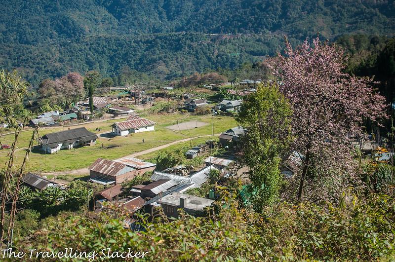 Pfutsero Phek Nagaland (18)