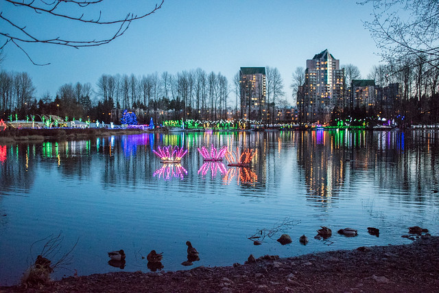 Lights at Lafarge Lake
