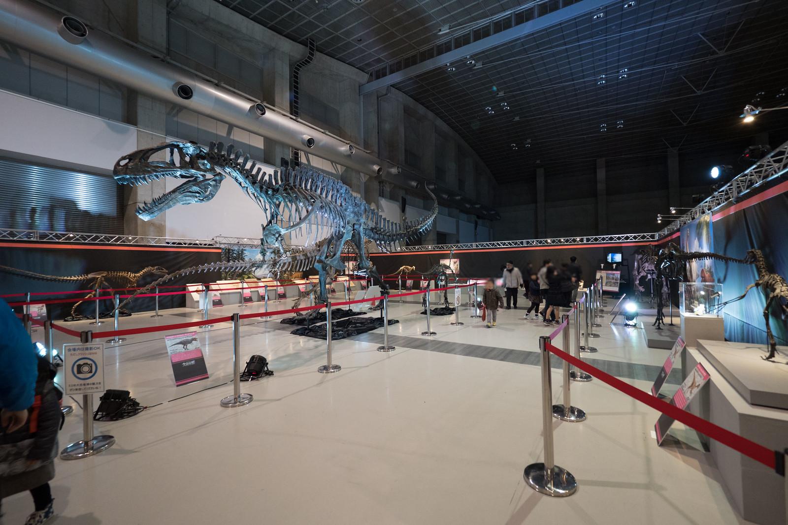 大恐竜博-13