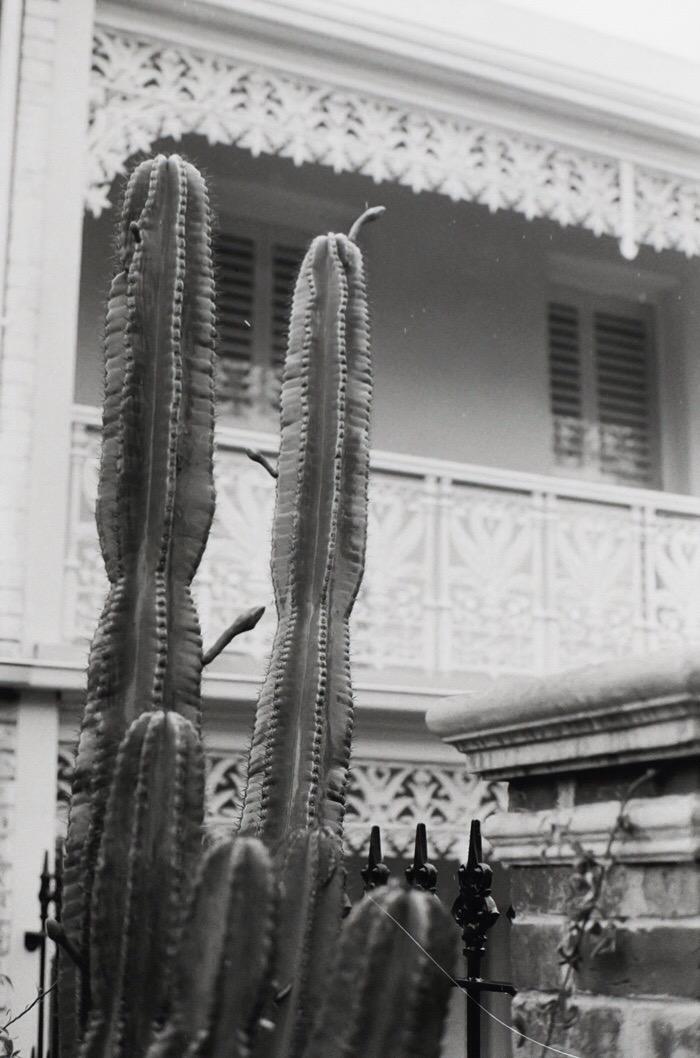 FCAM - cactus