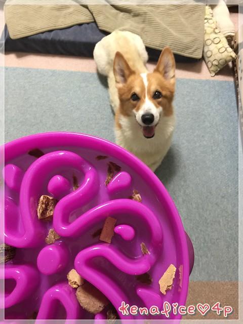 outward hound慢食碗