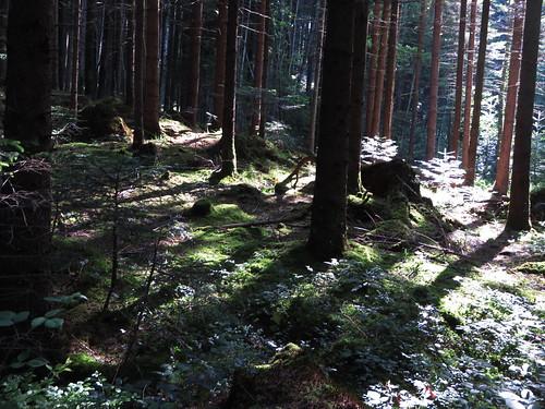 20170615 05 090 Jakobus Wald Bäume Sonne