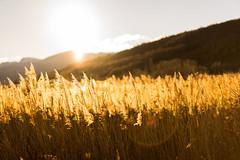 Coucher de soleil sur le lac de mison