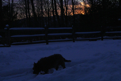 vermont winter snow outdoors sunset animals dogs cairnterriers pets