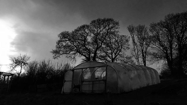 Polytunnel in the last light of the year