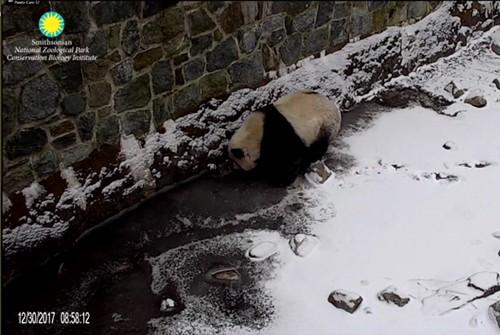 Panda Bei