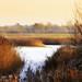 Reedbed Lake