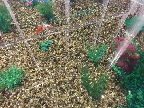 Goldfish (2) #toronto #ripleysaquarium #aquarium #tank #goldfish #koi #latergram