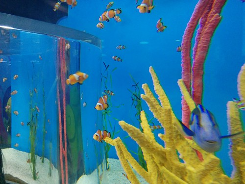 Clownfish (2) #toronto #ripleysaquarium #aquarium #fish #clownfish #latergram