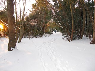 Botanic Garden winter scene