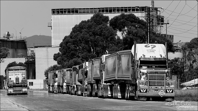 Line-up of Grain Trucks