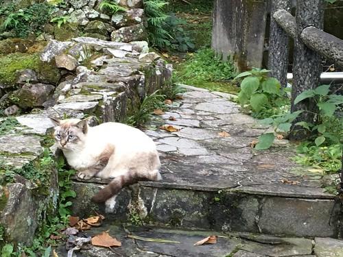 観光地にはネコ(4)