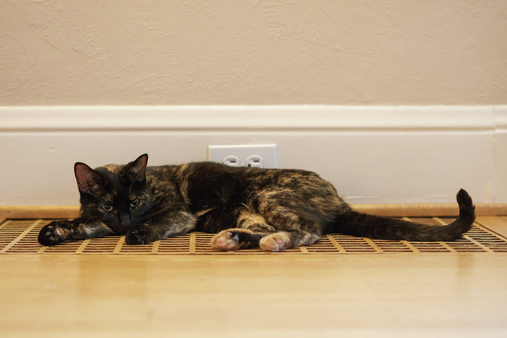 Our cat Trixie rests on the wooden heating vent