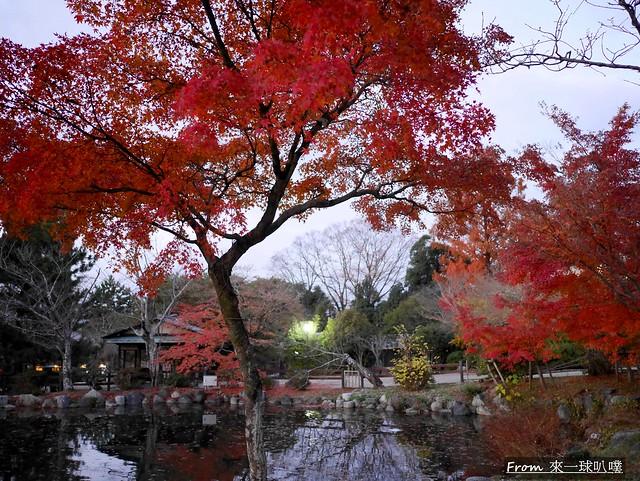 八阪神社44