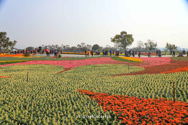 2017臺中國際花毯節44