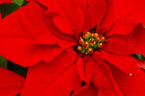 Christmas, color